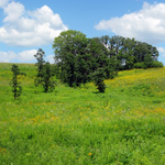 Wisconsin landscape. Courtesy of The Prairie Enthusiasts (WI).