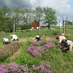 Barn and interns planting flowers at Mounds View upper nursery. Courtesy of The Prairie Enthusiasts (WI).
